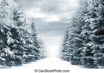 winter, straat