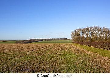 winter stubble field
