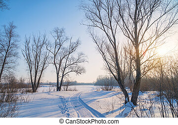Winter Sun in the trees above the snow-covered glade