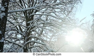 winter sun shines through tree covered with snow