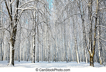 Winter sunny forest