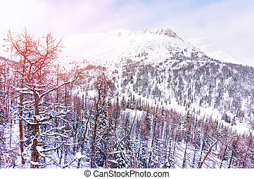 Winter Sunrise Over the Snowy Mountains in the Canadian Rockies