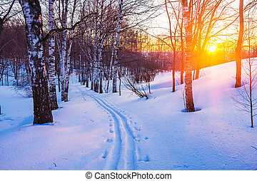 Winter sunset - Colorful sunset in winter forest