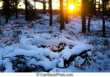 Winter sunset in scandinavian forest