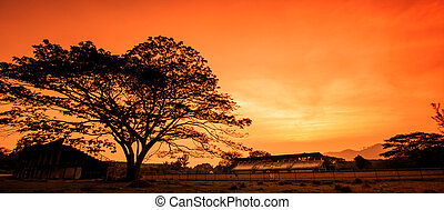 Winter sunset in the nature, with silhouettes of tree