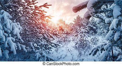 Winter sunset in the sunny snowy forest.