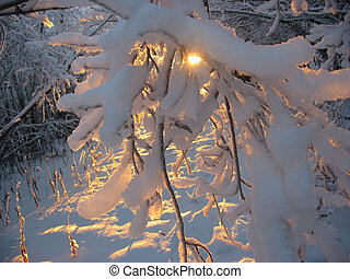 Sun is shining throu the snow and tree branches. Alaskan Sunset in the Winter