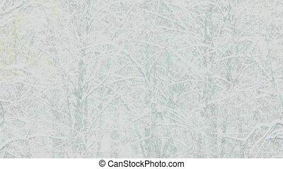 winter., tempête neige, neiger orage