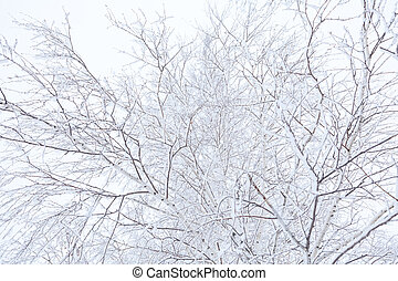 Winter time branches of trees