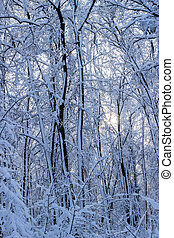 Winter time in the forest