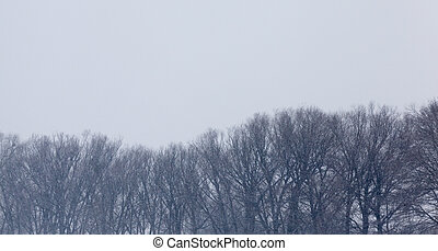 tops of trees during a snowfall. Poor visibility due to falling snow.