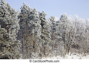 winter time of the year with a bright bright Park where the trees and soil are covered with deep snow