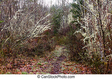 Winter trail with mossy brown and green trees