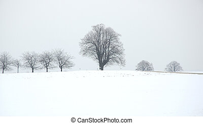 winter tree - a tree on winter field