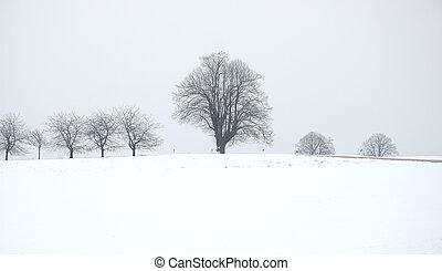 a tree on winter field