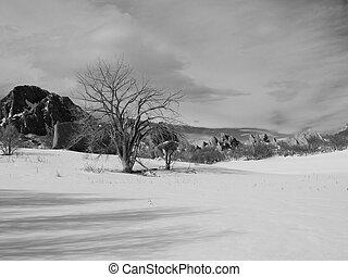 Winter Tree and Rocks