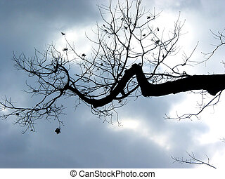 Winter tree branch - Leafless branch of a winter tree on the...