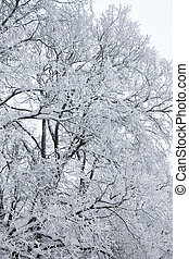 Winter tree branch under snow