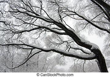 Winter tree branch