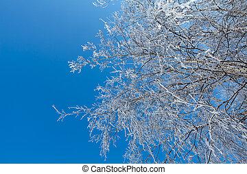 Winter tree branches horizontal