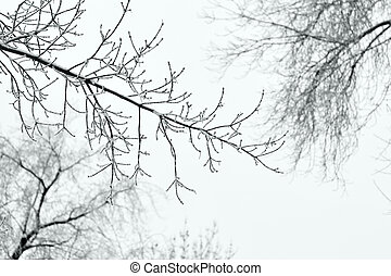 Winter tree branches under snow