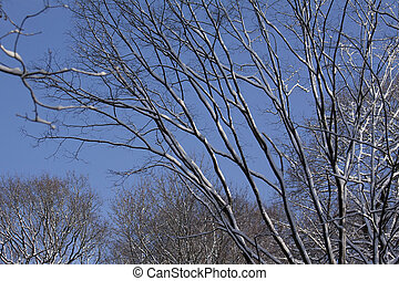 winter-tree
