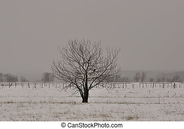 Winter tree in a field