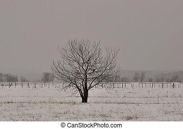 Winter tree in a field