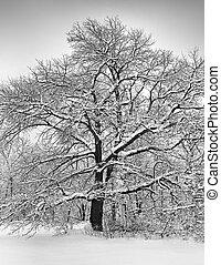 Winter tree in B & W