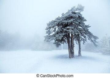 Winter tree in fog.