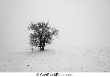Winter tree in fog.