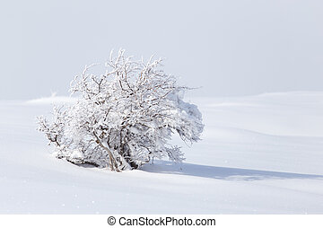 winter tree in nature