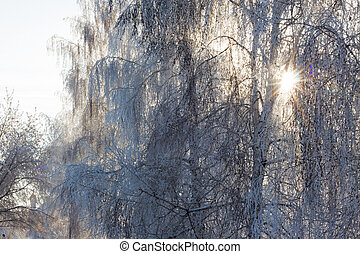 winter tree in snow frost and sun light