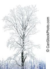 Winter Tree in Snow