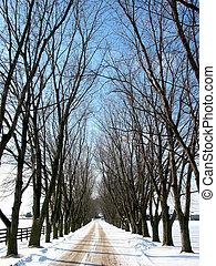 Winter tree lined lane 1