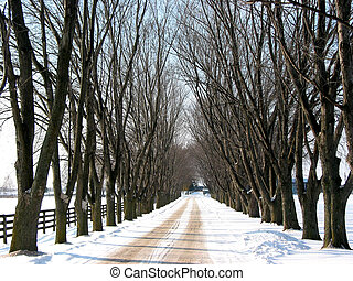 Winter tree lined lane on a snow covered farm on a sunny day