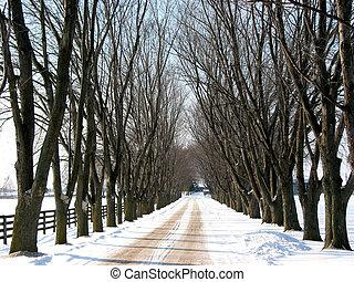 Winter tree lined lane 2