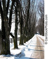 Winter tree lined lane 3
