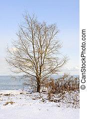 Winter tree on shore
