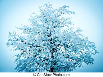 Winter tree on the blue sky background