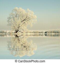 Winter tree on the lake shore