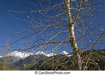 Winter tree under mountains