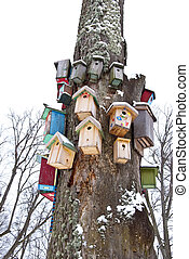 winter tree with birds nesting-boxes collection