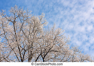 winter trees against the blue sky