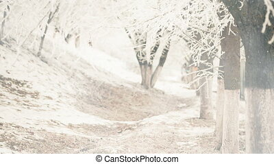 winter trees alley view with falling snowflakes
