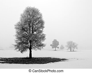 Winter Trees Covered in Frost on a Foggy Morning