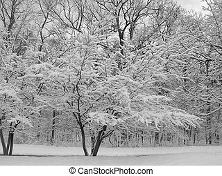 Winter trees covered in snow