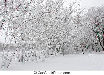 Winter trees covered in white fluffy snow