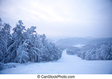 Winter trees covered with fresh snow.