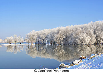 Winter trees covered with frost on Danube river